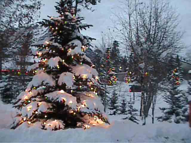 RB01-Photos of Christmas trees.jpg