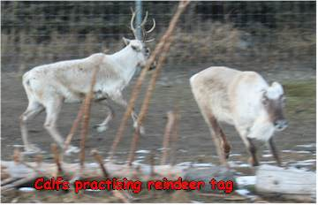 Reindeer Games - tag!